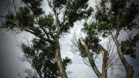Looking Up, Original Photography, Resources